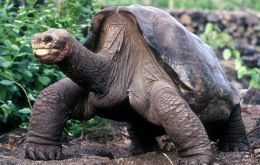 The giant tortoise and a great attraction of the park is believed to have been 100 years old