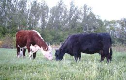 Cattle world-wide are exposed to the disease