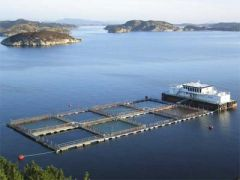 Salmon farming in Chile is a huge industry and among the leading export items