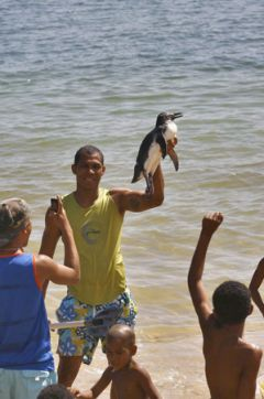 A young fellow holds up a penguin even at the Porto da Lenha beach in Salvador