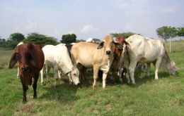 Better prospects for cattle farming in Paraguay