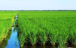 The area planted with rice was 181.400 hectares