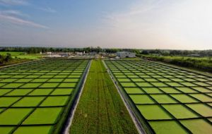 """The trick is to convert CO2 from passive to active"" at the algae pits"