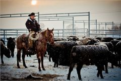 Oklahoma cowboy Anthony Stidham helping Putin bring beef production to pre-Stalin times