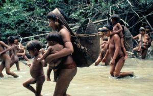 The Yanomami tribe are hunters but are constantly threatened, when not attacked, by gold prospectors and smugglers