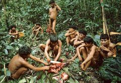 The Yanomami live deep in the Amazon jungle and are victims of violence by intruding miners