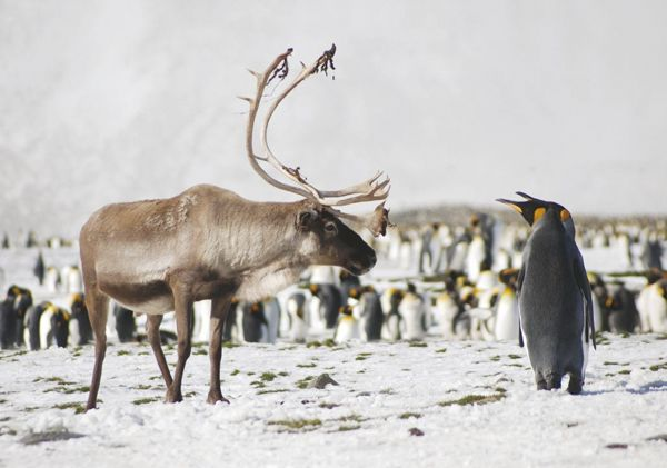 A field guide to the wildlife of South Georgia with 350 colour ...