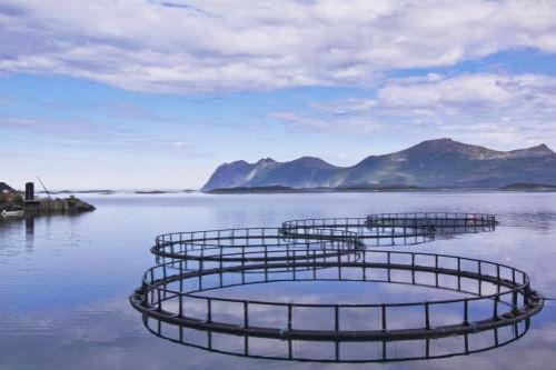 Развитие аквакультуры откроет новые экспортные рынки для Бразилии