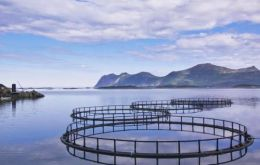 Aquaculture is the world's fastest growing source of animal protein, growing by more than 60% between 2000 and 2008.