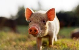 Pork, the most popular meat in 2011 accounting for 37% of both production and consumption