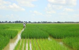 2012 world rice production may surpass last season's record, supported by favourable growing conditions.