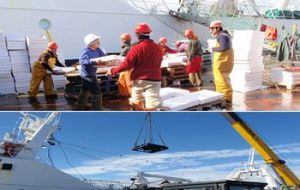 World famous Falklands' squid being unloaded in Stanley