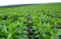 Farmers are forecasted to plant 19.4 million hectares of soybeans this season