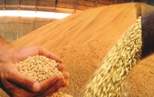 The country could harvest 82.6 million tons of oil-seed this coming season