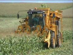 A tight year ahead for corn because of the poor US harvest