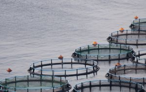 Aquaculture generates more value than extractive fishing in Chile