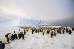 The newly-discovered 9,000-strong emperor penguin colony on Antarctica's Princess Ragnhild Coast