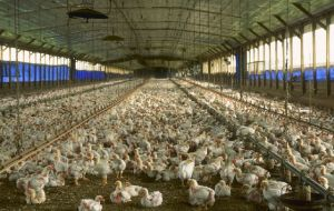 Commercial broiler chickens were treated with five diets containing probiotics