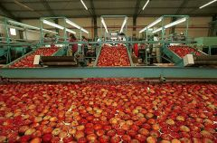Despite Brazilian demand apples and pears exports income was down 135 million dollars last year