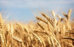 Early prospects for 2013 cereal production point to increased world wheat output