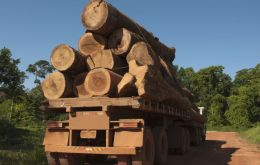 It is estimated that the global illegal trafficking of timber is a 100bm dollars business