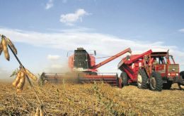 Soybeans has become the main crop for Argentine farmers