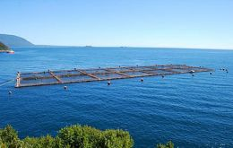The Spanish company has abundant assets in Chile's salmon farming industry