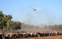 Greatest threat to northern pastoral productivity is the drying up of finance