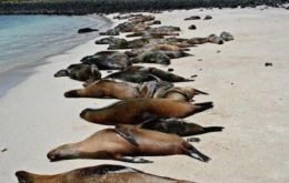 The picture from Sernapesca shows a beach covered in dead marine life