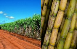Sugar cane is to be transformed into high-margin chemicals and boost ethanol output