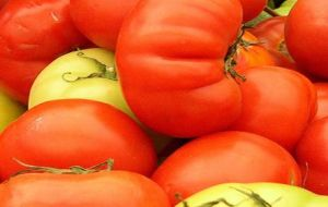Government tells Argentines to stay away from expensive tomatoes and go after other fruits and vegetables