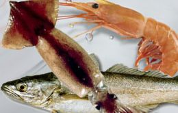 The boost in squid exports was also accompanied by increases in hake and shrimp shipments