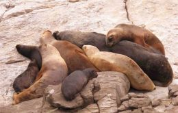 """Rediscovering Falklands Ocean Sentinels"", is the name of the winning project on sea lions."