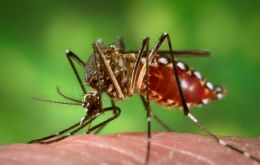 The mosquito Aedes aegypti spread the four strains of the virus