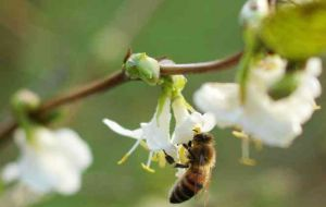 Europe as a whole has two-thirds of the honeybees it needs for pollination, according to the report from Dr. Breeze