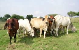 Livestock industry is one of the country's main industries.