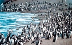 The study refers to 400,000 Magellanic penguins living along the coast of Argentina in Punta Tombo peninsula