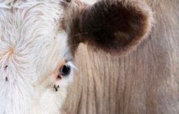 A single ten-year old cow from a group of 80 was found to have atypical BSE after laboratory testing