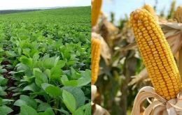 Soy and corn are the country's main crops