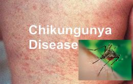 Chikungunya symptoms begin three to seven days after being bitten by an infected mosquito