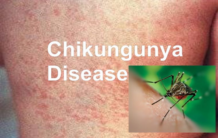 Mosquito-borne Chikunguna cases reported in Miami - MercoPress Mosquito-borne Chikunguna cases reported in Miami - 웹