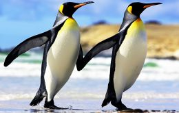 """It's not happy news for the emperor penguin,"" said Hal Caswell of the US Woods Hole Oceanographic Institution"