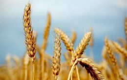 Improved production prospects for coarse grains and wheat crops, particularly in the United States, the EU and India.