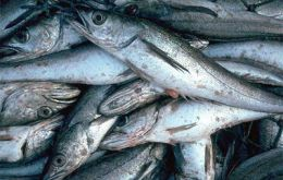 Hake and croaker were the main export items