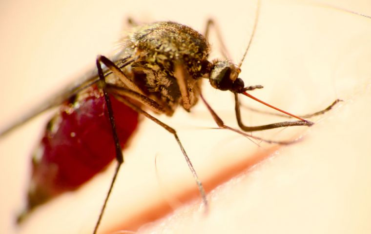 PAHO said that the total figure for the mosquito-borne disease had reached 513,393 cases compared with 473,523 cases a week earlier.