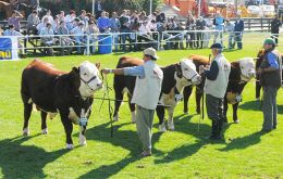 During ten days a major display of the best of Uruguay's livestock and agriculture supplies
