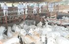 The Paraguayan Rural Association plans to double cattle slaughtering by 2020