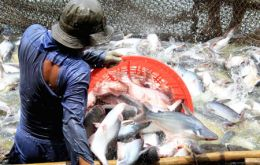 Catfish farmed in Vietnam has often raised questions about conditions under which it is produced but has displaced other produce because of its lower price