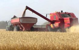 World wheat production in 2014 is forecast to reach a new record