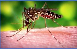 Chikungunya is a viral disease transmitted to humans by infected mosquitoes. Symptoms include high fever and headache with significant pains in the joints